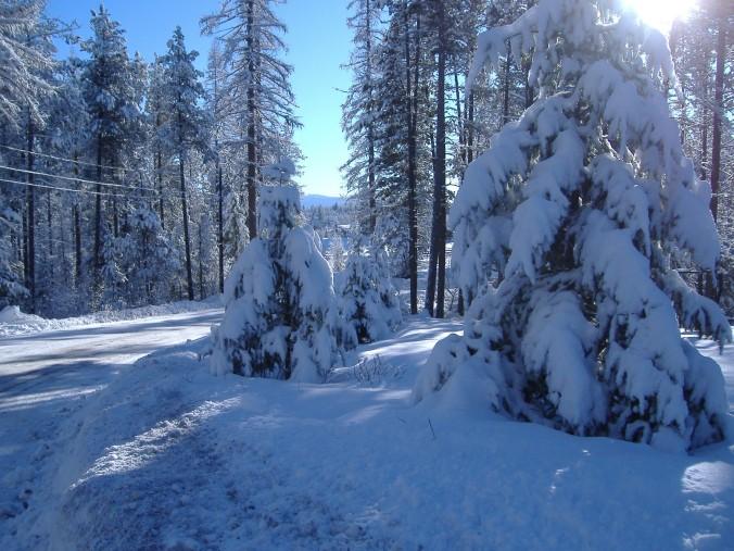 Alberta Winter Scene