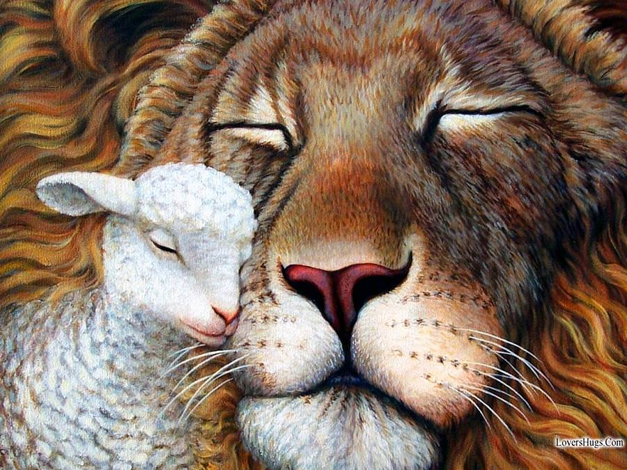 lion-and-lamb-best-friends-painting-qm1bvi-clipart | Calgary ...